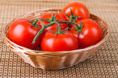 Tomatoes on branch — Stock Photo