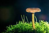 伞菌 — 图库照片