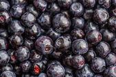 Many blueberries — Stock Photo