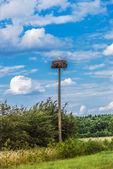 Stork chicks — Stock Photo