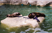 Two seals in a zoo — Stock Photo
