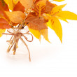 Bright autumn leaves bouquet — Stock Photo