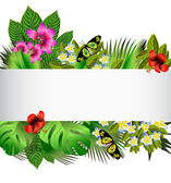 Tropical flowers and leaves over white — Stock Vector
