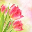Beautiful background with tulips — Stock Photo