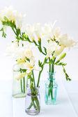 Fleurs de freesia — Photo