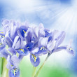 Beautiful background with irises — Stock Photo #21250967