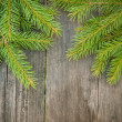 Spruce branches — Stock Photo #31409135