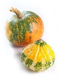 Autumn pumpkin — Stock Photo