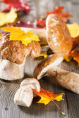 White Mushroom (cep) — Stock Photo