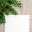 Spruce branches — Stock Photo