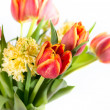Bouquet of yellow hyacinths and red tulips — Stock Photo #43670283