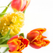 Bouquet of yellow hyacinths and red tulips — Stock Photo #44074581