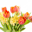 Bouquet of yellow hyacinths and red tulips — Stock Photo #44495735