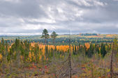 Taiga (boreal forest) in Komi region — Stock Photo