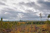 Taiga (boreal forest) in Komi region — Stock Photo