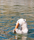 Polar white bear eat bread — Foto de Stock