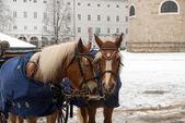 馬キャリッジ — ストック写真