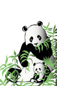 Two pandas in bamboo thickets — Stock Photo