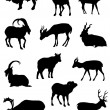 Collection of silhouettes of rams  — Imagen vectorial