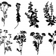 Collection of silhouettes of spicy herbs  — Stock Vector