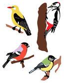Collectie van kleur vogels — Stockvector