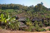 香蕉种植园 — 图库照片