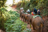 Elephant trekking — Stock Photo