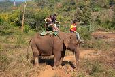 Elephant trekking — Stock Photo