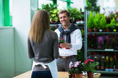 In store flowers — Stock Photo