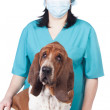 Female vet with a dog - Stock Photo