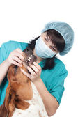 Vet checking a dog — Stock Photo