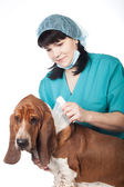 Vet is taping up a dog — Stock Photo