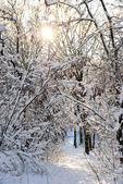 La nieve en las ramas — Foto de Stock