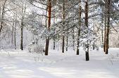 Winter im park — Stockfoto
