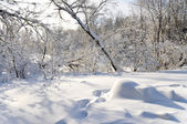 Winter in bos — Stockfoto