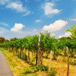 Vineyards in Vienna — Stock Photo #31203973