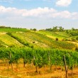 Stock Photo: Viennese wine yard Austria