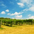 Wine yard Vienna — Stock Photo