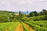 Viennese wine yard — Stock Photo