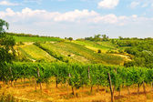 Viennese wine yard Austria — Stock Photo