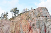 Trees on a vertical rock — Stock Photo