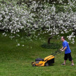 Man with lawn mower in garden, blooming apple trees — Stock Photo
