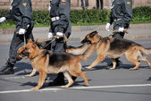 Police with dogs walking on the street — Stock Photo