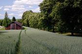 Ancienne grange est debout dans le champ — Photo