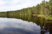 Landscape of the forest lake in summer — Stock Photo