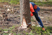 The woodcutter is cutting down a tree — Stock Photo