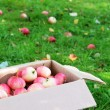 Stock Photo: Box with ripe apples on grass