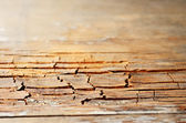 Brown grunge old cracked wooden texture, small depth of field — Stock Photo