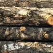 Stack of wood felled birch logs — Stock Photo