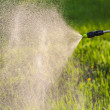Watering the lawn with a sprayer — Photo